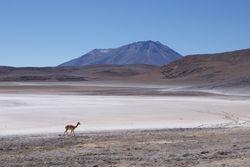 Altiplano, Bolivia 38