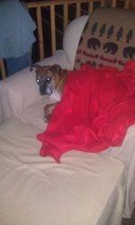 Gracie all snuggled in