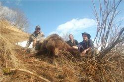 Steve Dougherty - Spring 2010 Brown Bear
