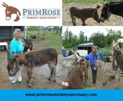 PrimRose Donkey Sanctuary poster