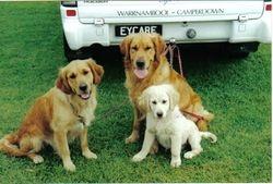 Gem, Bailey & Bridie at Obediance Trial