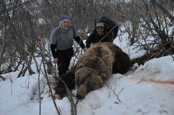 Edd Strauss Bear
