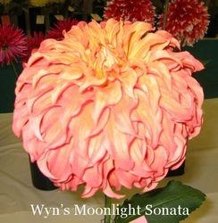 Wyn's Moonlight Sonata-B ID DBDp /Y/O