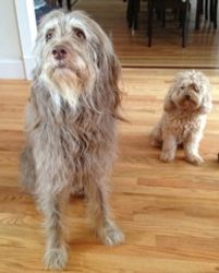 Max (left) Fozzie (right)