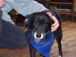 23 Dec 09   -  Foxy was not well for awhile after being castrated, and was quite ill.  He is now doing a lot better
