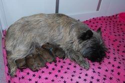 Aoibheann and pups