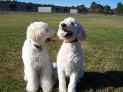 Hadley  & Sam