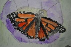 Butterfly- Watercolor