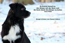 Januarhund - Mowgli