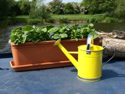 Dinky watering can