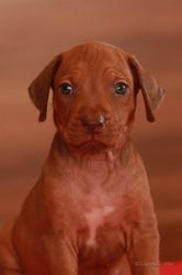 08-Mr Brown- Clyde Taylor by Luanda-show-5 weeks