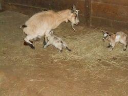 judy justafter giving birth