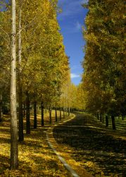 Autumn at Tarra-Warra Vineyard