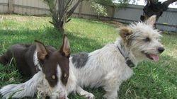 Maddie & Lulu