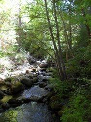 Ashland Creek in Lithia Park