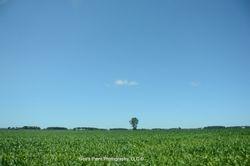 Lone Tree, Lone Cloud, Beautiful Day