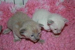 2 handsome boys - 12 days old