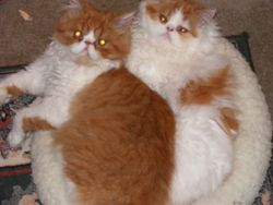 Aslan & Smooch
