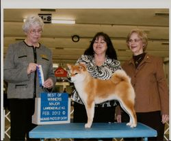 GCH Showboat Zeta Jones