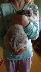 Papa bunny!