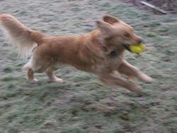 Run Ducky, Run!