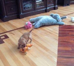 I like toys.