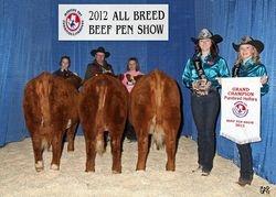 Champion Purebred Heifers