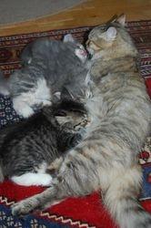 Jokotai med sine tre små søte jenter, 7 uker.