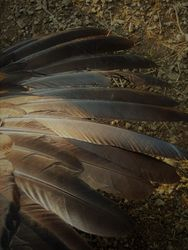 Black-winged Bronze primary feathers