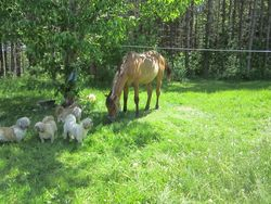 Jessie and the doggies