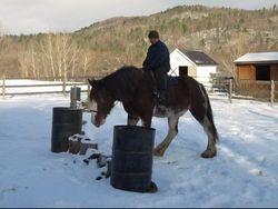 Good mare