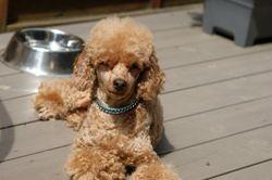 Bailey njuter i solen