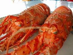 Lobsters Palinurus Elephas cooked