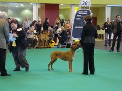 Lexy and Janice drawn out at Crufts