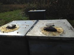 Feeding the Bees