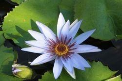 Vallarta Botanica Gardens - flower