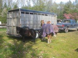 cuttest ponies!!