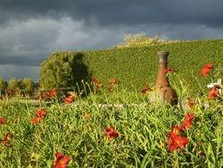 The Daylily Garden - Barn 2013