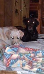 Savannah and Hershey
