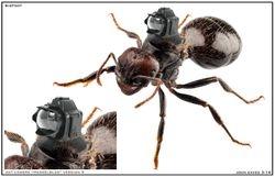 Ant camera #2