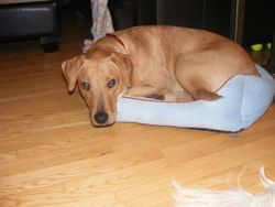 Dexter allowing Caidence to use his bed.