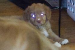 Puppy Lazer eyes