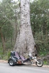 Trike beside a big tree