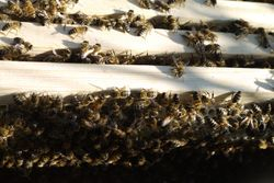 Our Bee's