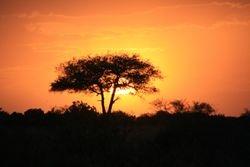 Sunset - Masai Mara Game Reserve