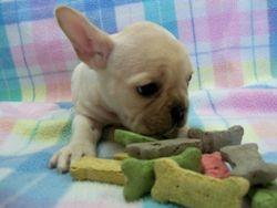 Okie Boo x Tiny Puppies