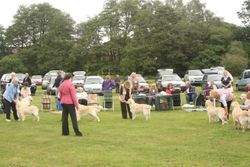 Christchurch & New Forest Canine Soc 12 June 2010