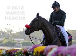 Lava Man and Flowers 2