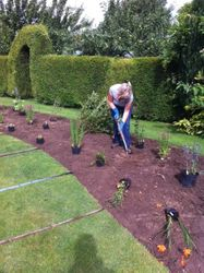 Starting to plant up the curved border