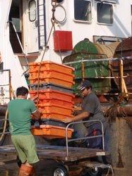 The trawler catch